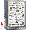 EUROGRAPHICS 6000-0313