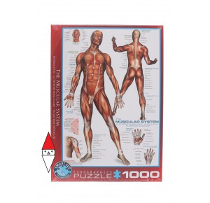 EUROGRAPHICS, , , PUZZLE TEMATICO EUROGRAPHICS ANATOMIA THE MUSCULAR SYSTEM 1000 PZ